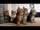 Котята синхронно вертят головой