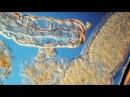 The Incredible Microscopic Annelid Worm, Aeolosoma. Darkfield, DIC Lighting. 125x-800x.
