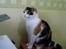 Очень смешной котик, недопонимает