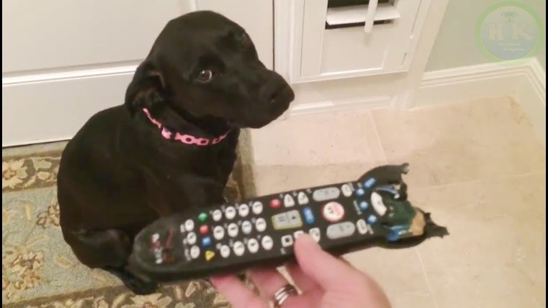 Funniest Guilty Pets Reaction When Knew They Did Something Wrong   Happiness Kingdom