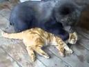медведь и кот воспитатель mp4
