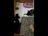 Вечерние бирюльки) Пожалуйста, выбирайте себе котенка! 8903-930-55-13, 8953-871-24-53
