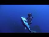 Spearfishing New Zealand Bluefin Tuna Tonga with MJK