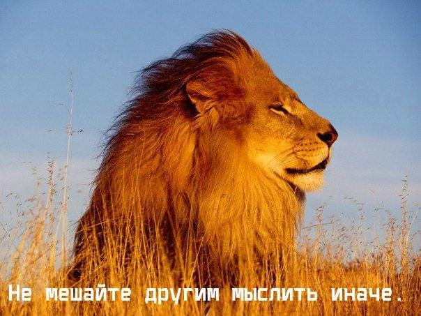 http://cs410417.vk.me/v410417158/6fba/tVEw8EGZUhA.jpg