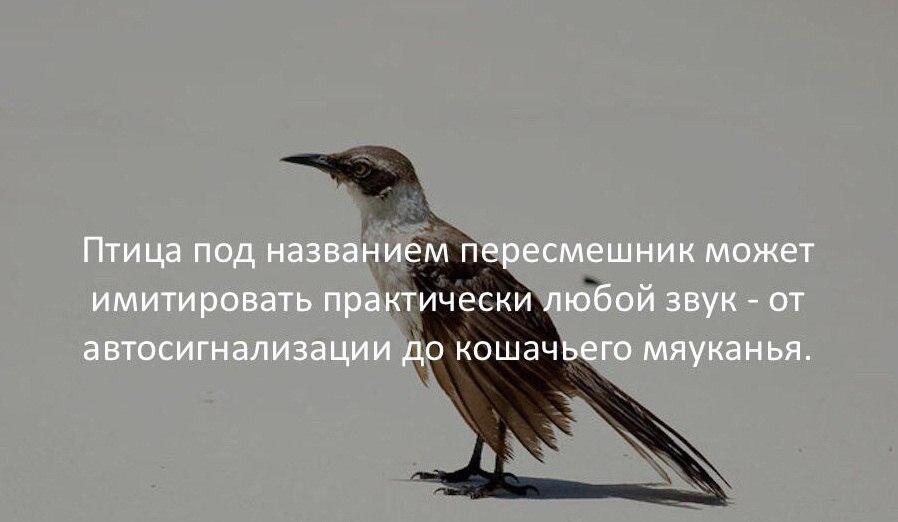 https://sun1-5.userapi.com/c543107/v543107547/52e9f/ncg1OLQPNio.jpg