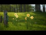 Gil Ventura - Petite Fleur
