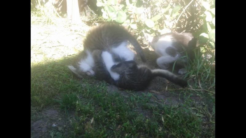Дачные котятки 2