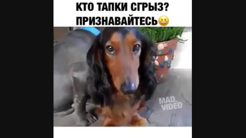 собачья совесть
