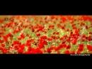Aly Alyyew - Bu derdi (2014) full HD