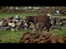 Мой фильм хватит копатся учёным про ковчег оставте покойеОхотники за мифами Серия 2 Ноев Ковчег (1)(1)