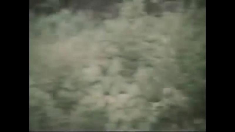 Песня о дружбе из кинофильма Гардемарины Вперёд