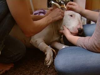 Мужчина и собака три недели плутали в тайге и выжили: рассказываем шокирующие подробности