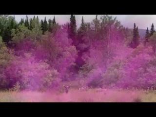 Фиолетовое Пламя.Диспенсация Нового Цикла.Трансмутация Кармы между Россией и Украиной