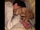Lil meow wants to cuddle