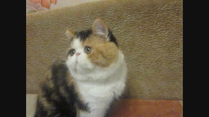клуб цветоводов, мои котята 024