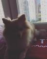 Карамелька_Ди on Instagram