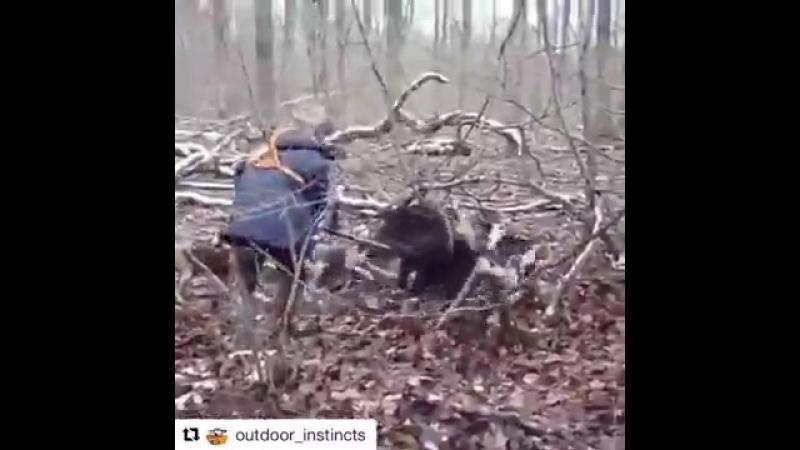 Охота На кабана без огнестрельного оружия