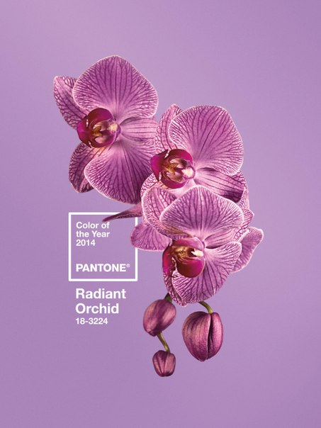 Radiant Orchid from Pantone