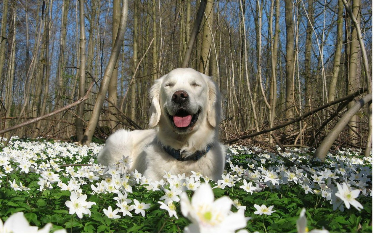 Собака весной