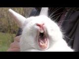 Как животные поют, разговаривают и ругаются )))