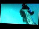 Impressionante ataque a mero - by Nego D'agua