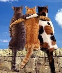 картинки друзья самые лучшие друзья