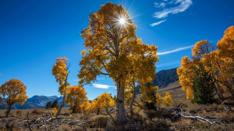 Картинка осень. Осень, деревья, природа.