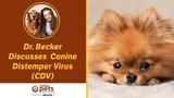 Чума плотоядных Canine Distemper Virus (CDV)
