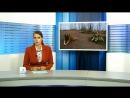 Причину смерти собаки в парке Монрепо установит экспертиза