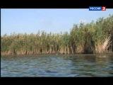 Любительское рыболовство.  Лиманы Приазовья. II