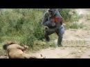 LION vs GORILLA ►►Leopard vs Baboon Fight To Death - Most Amazing Wild Animal Attacks #8