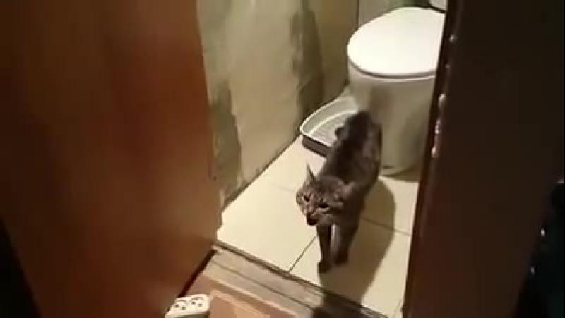 Приколы с котами | Кот не пускает в туалет