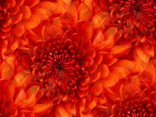 Цветочные и растительные фоны - Страница 2 Wt4T3pBDLSU