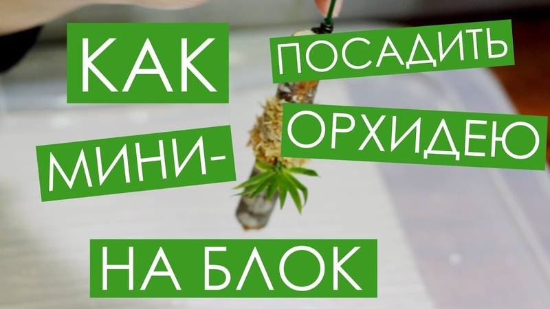 Как посадить мини орхидею НА БЛОК Ericyna pusilla Oncidium pusillum Вып 7
