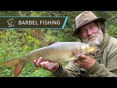 Barbel Fishing With Carp Gear