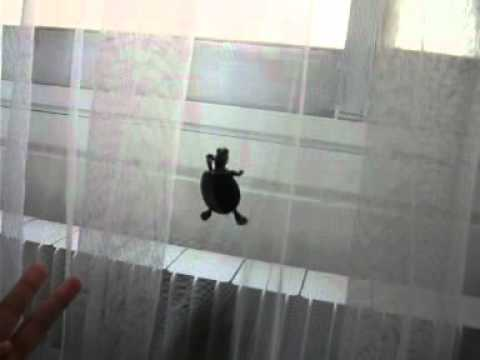 Red Eared Slider escaping from the curtain!
