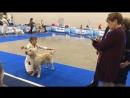 Eurasia 2018 champion class Ch Valensia Daryaschaya Radost'