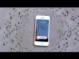 iPhone управляет муравьями