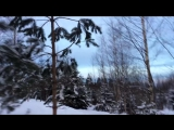 Прогулка по лесу с элементами неожиданного ускорения