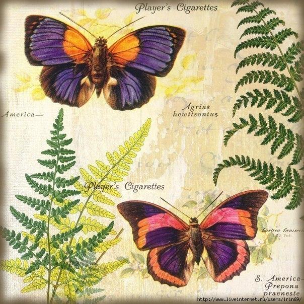 Картинки с бабочками для творчества (7 фото)