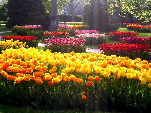 Парад тюльпанов 2013