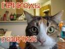 Приколы про котов и кошек с ОЗВУЧКОЙ Смешные коты и кошки 2018 Лучшие приколы с котами
