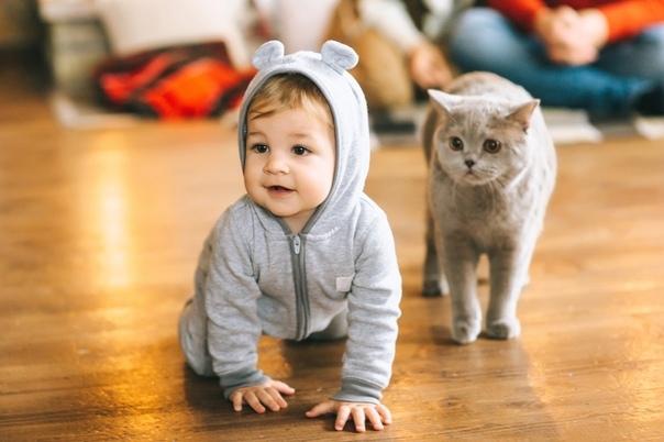 Дети, кошки и все остальное На свете есть тетя Наташа, она мамина подруга, у нее в доме масса интересных вещей. Во-первых, кошка Шуша, серая и застенчивая, она очень любит, когда Даша ловит ее в