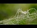Маскировка лишайникового кузнечика вида Lichen Katydid