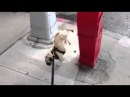 Собака-обоссака Dog-acrobat