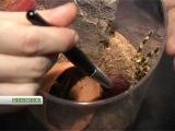 Ants-empere.ru: Гигантские пауки - домашние любимцы