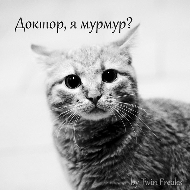 http://cs311524.vk.me/v311524352/6764/2Tbp_jmMy3g.jpg