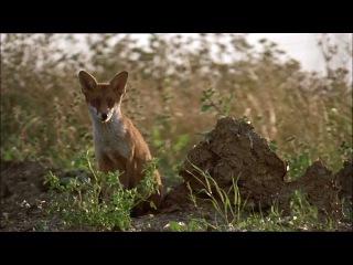 BBC Natural World - The Unnatural History of London