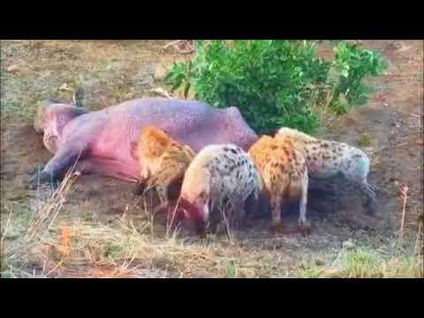Жестокость природы во всей красе Cruelty of nature in all its glory
