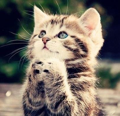 Сколько лет живут кошки. Кошка — долгожитель.